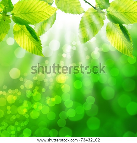 Green spring leaves - stock photo