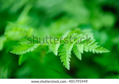 Green spring leaves macro - stock photo