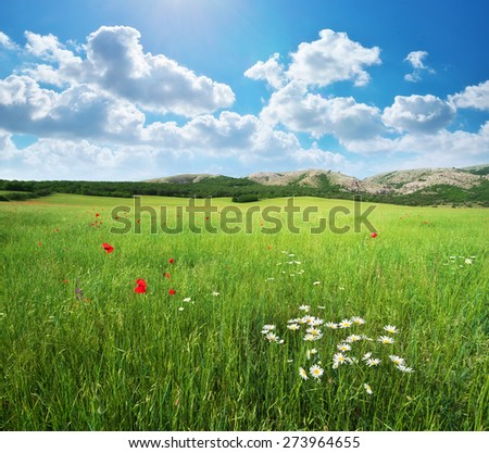 Green spring meadow. Nature landscape composition.  - stock photo