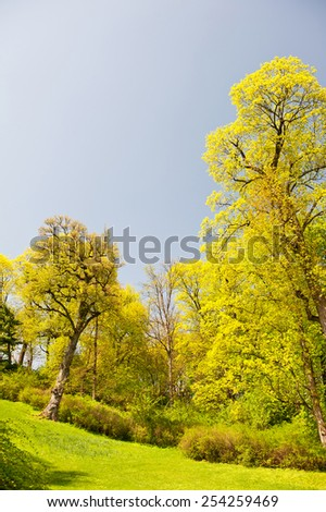 Green spring trees vibrant nature view, plants bright leaves in sunlight bucolic calm sunny day view in Warsaw park, Europe. Deciduous trees foliage in vertical orientation, nobody. - stock photo