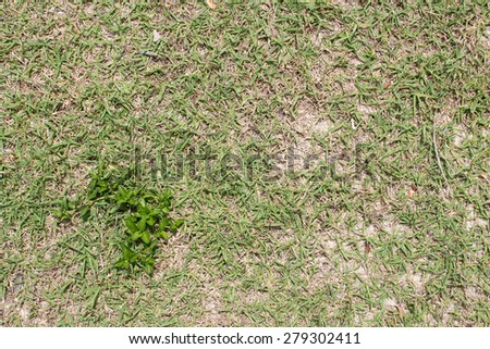 Green sprout and green grass background - stock photo