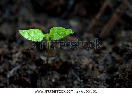 Green sprout growing from ground. Dewy young leaves sprouting plants. Spring background - garden. - stock photo