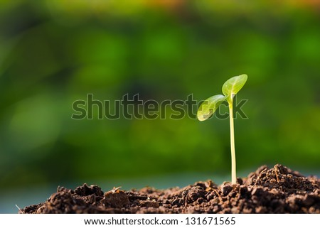 Green sprout growing from ground, new or start or beginning concept - stock photo