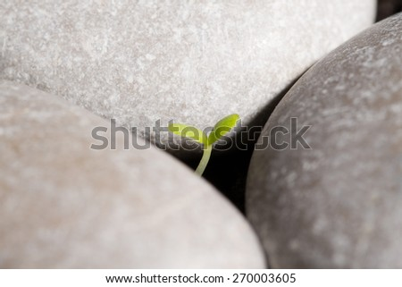 Green sprout growing from ground or the concept of starting a new business - stock photo
