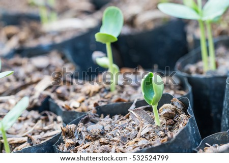 Green sprout growing from seed in soil