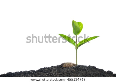 Green sprout growing from seed isolated on white background