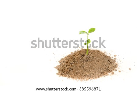 Green sprout growing from soil. Isolated on white. - stock photo