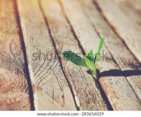 Green sprout growing in wooden boards . Ecology concept or new life concept - stock photo