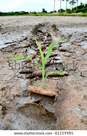 Green Sprout grown on arid crack earth land, Global warming concept - stock photo