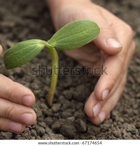 green sprout in child hand - stock photo