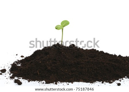 Green sprout in heap of earth - stock photo
