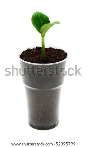 Green sprout in the pot isolated on white - stock photo