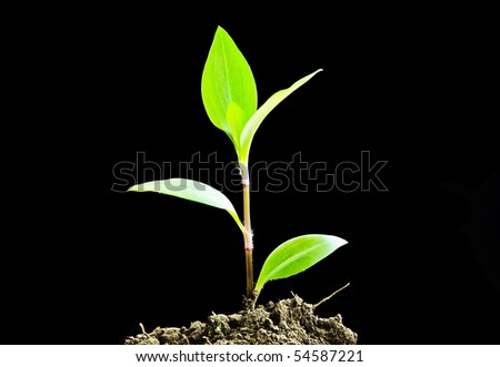 Green sprout on a black background - stock photo