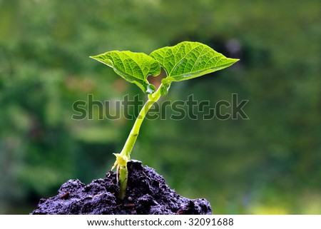 Green sprout on a green background - stock photo