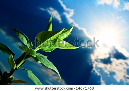 green sprout on background blue sky - stock photo