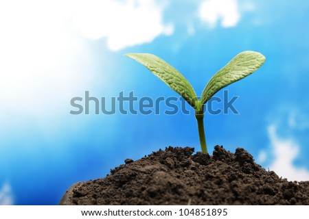 green sprout on sky background - stock photo
