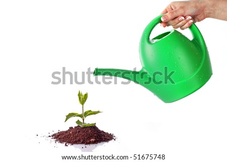 Green sprout on  white background - stock photo