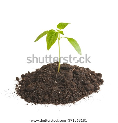 Green sprout plants growing from heap of soil, isolated on a white background. Ecology and hope - stock photo