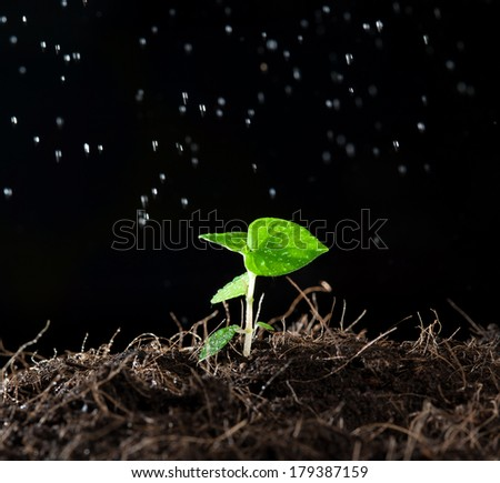 green sprout with a spray of water around - stock photo