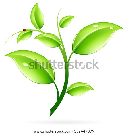 Green sprout with leaves and ladybird isolated on white
