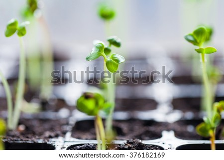 green sprouts have sprouted in the ground