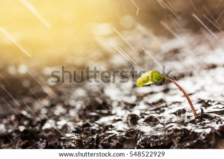 Green sprouts in  rain and yellow tones with sun rays