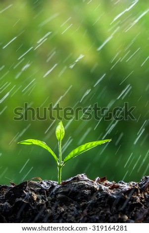 Green sprouts in the rain - stock photo