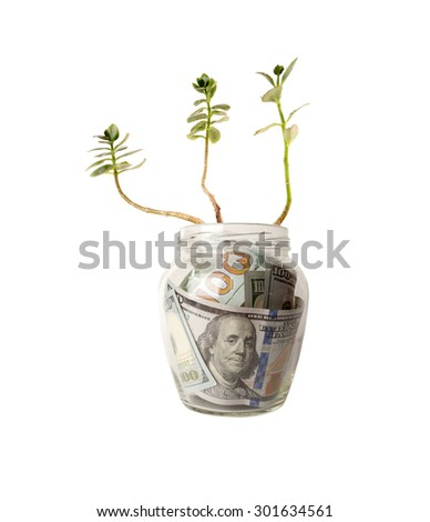 Green sprouts of dollar bills. Feed business, prosperity, economic growth, private business - concept. - stock photo