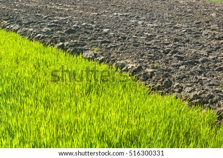 green sprouts, pshenici on a spring plowed field