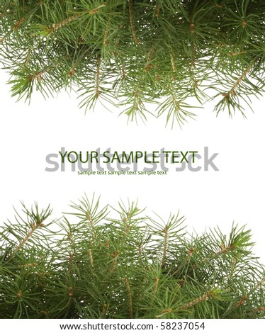 green spruce branch on white background - stock photo