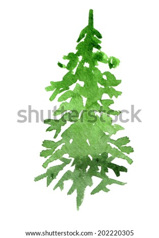 green spruce on white background - stock photo