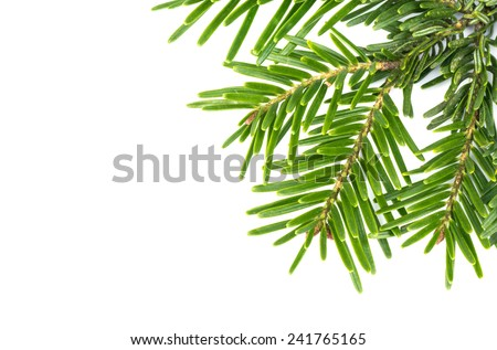 Green spruce twig in the corner on a white background - stock photo