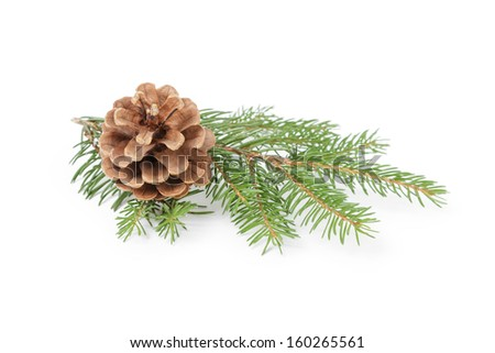 green spruce twig with cone, isolated on white background - stock photo