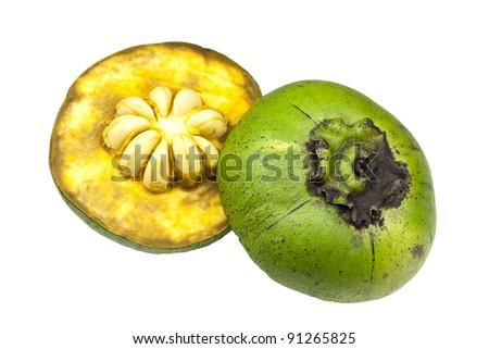Green stage of a black sapote - stock photo