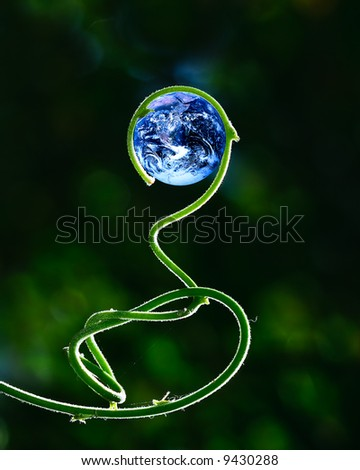 Green stalk and Earth (Earth image courtesy of NASA - Blue Marble, mission Apollo 17) - stock photo