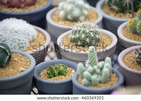 Green succulent plant / cactus in small hardened clay pots with selective focus. - stock photo
