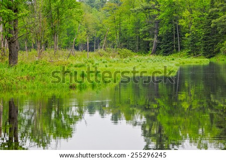Green summer forest in a conservation area at Black River, Ontario, Canada