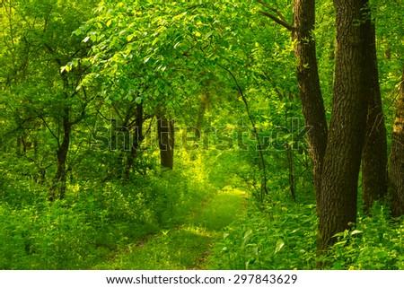 green summer forest scene - stock photo