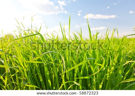 green summer grass and sky - stock photo