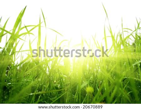 green summer grass and sun - stock photo