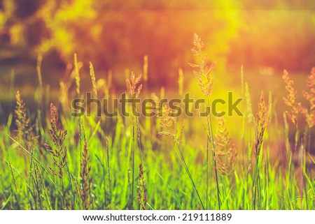 Green Summer Grass In Sunlight. Toned Instant Photo - stock photo