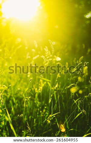Green Summer Grass Meadow Close-Up With Bright Sunlight. Sunny Spring Background. Toned Instant Filtered Image - stock photo