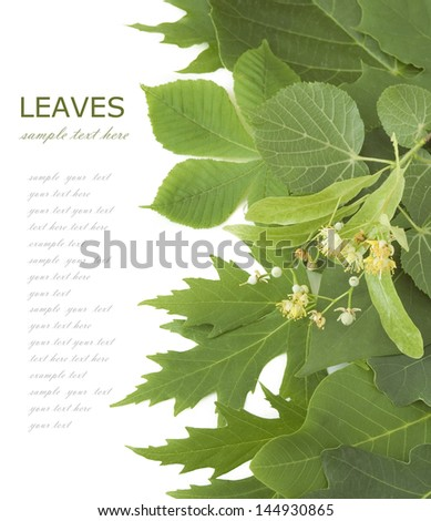 Green summer leaves background isolated on white with sample text - stock photo