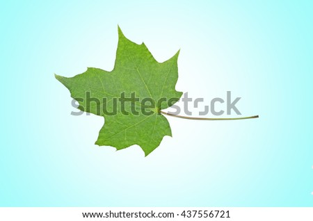 green summer leaves on the sky background - stock photo