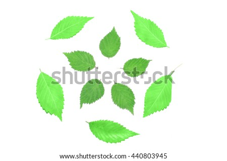 green summer leaves on the white background - stock photo