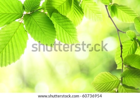 green summer leaves with copyspace showing nature concept - stock photo