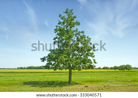 Green summer meadow with herbs and big oak tree - stock photo