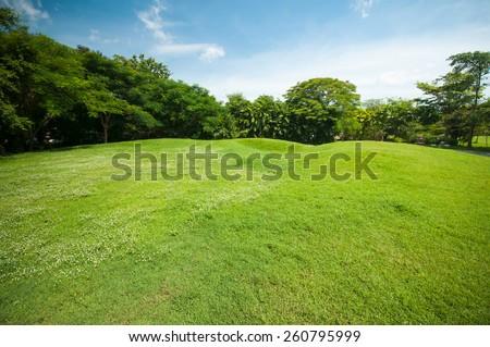 Green summer park garden with blue sky. - stock photo