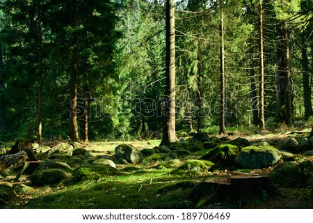 Green sunny landscape with trees in forest - stock photo