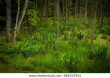 green swamp in the summer - stock photo